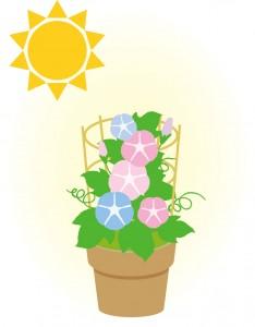 鉢植えの朝顔は日当たりの良い場所に置く