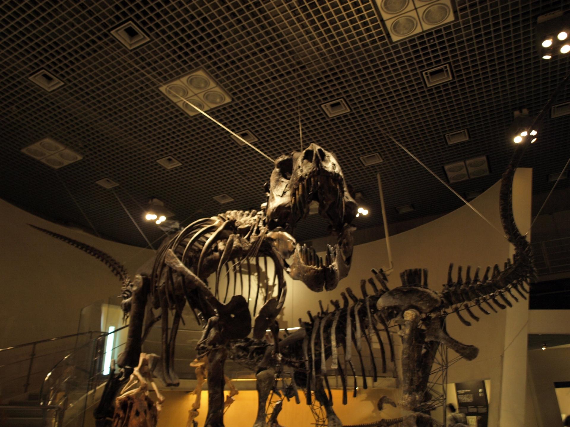 恐竜ティラノサウルスの模型