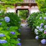 2016【大阪府】あじさい名所ランキング。アクセスや開花時期は?
