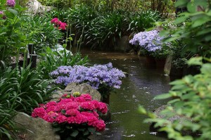 長居植物園の渓流沿いの紫陽花