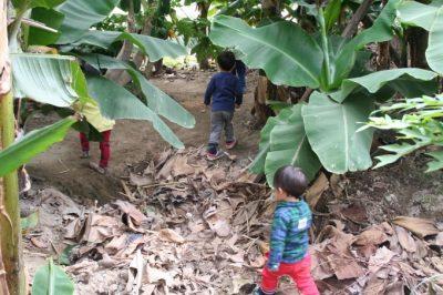 稲沢バナナ園で遊ぶ子供
