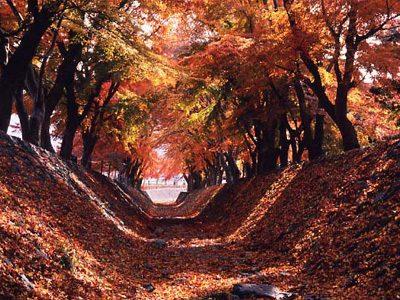 河口湖の紅葉2016