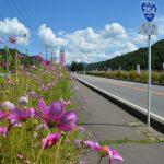 長野・佐久高原コスモス祭り2016日程!見頃や駐車場、ランチ情報