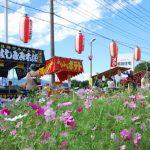 埼玉・岡部コスモス祭り2016日程!花火大会の時間や駐車場は?