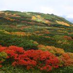 北海道・大雪山の紅葉2016!見頃の時期、ロープウェイの料金は?