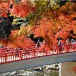 香嵐渓の紅葉の見頃やピーク時期。混雑回避ルート&ライトアップ