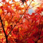 赤城山の紅葉2016。見頃や駐車場。絶景はどこ?ランチ・観光情報
