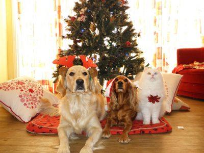 クリスマスツリーとペット