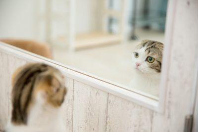 鏡に映る姿を見ている猫
